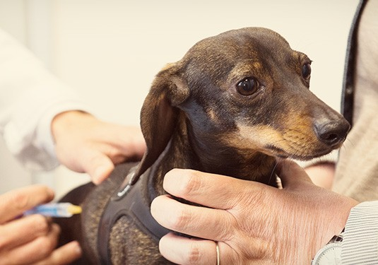 Foster Results' Daily Accounting Services Improve Quality of Life for Busy Veterinarian